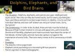 dolphins elephants and bird brains