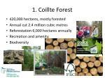 1 coillte forest