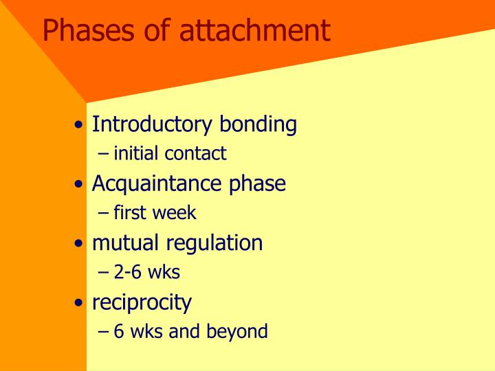 Phases of attachment