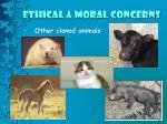 ethical moral concerns5