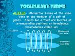 vocabulary terms10