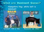 what are dominant genes2