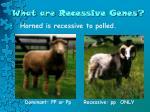what are recessive genes1