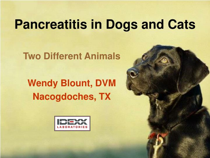 pancreatitis in dogs and cats n.