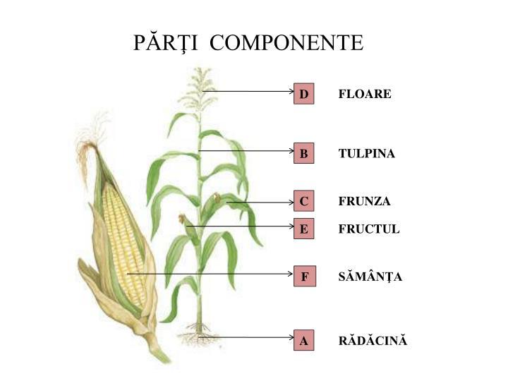 Componente Parti