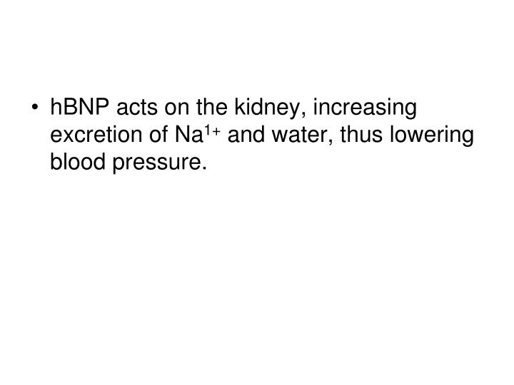 hBNP acts on the kidney, increasing excretion of Na