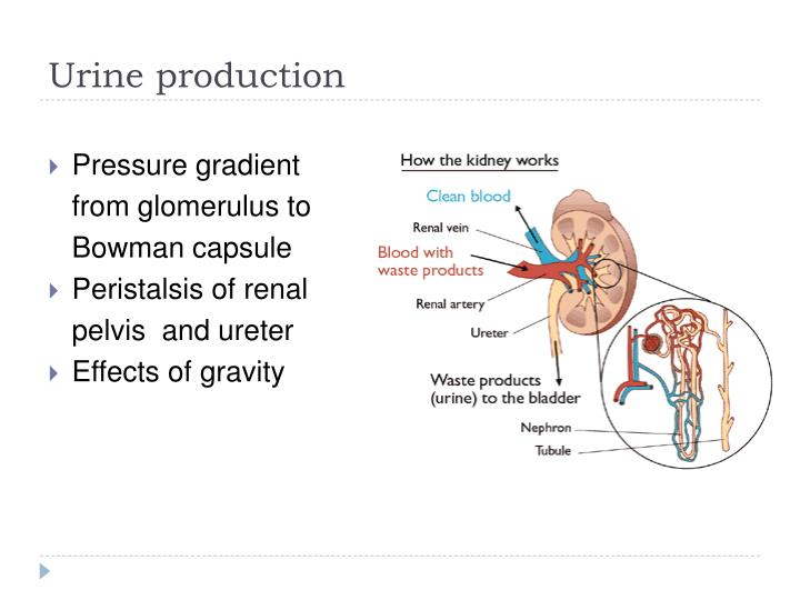 PPT - Urinary tract obstruction PowerPoint Presentation - ID:1416458