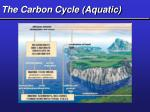 the carbon cycle aquatic
