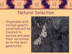 natural selection3
