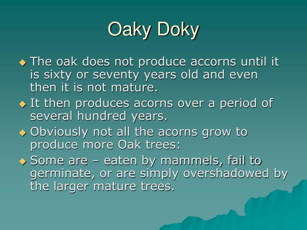 Oaky Doky