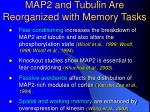 map2 and tubulin are reorganized with memory tasks