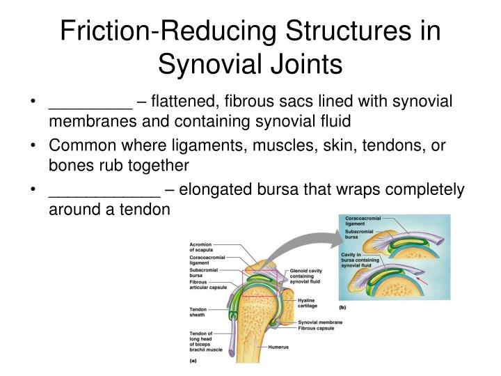 Friction-Reducing Structures in Synovial Joints