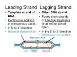 leading strand lagging strand