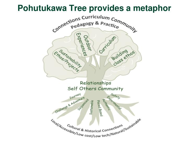 Pohutukawa tree provides a metaphor
