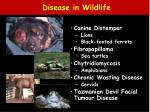 disease in wildlife