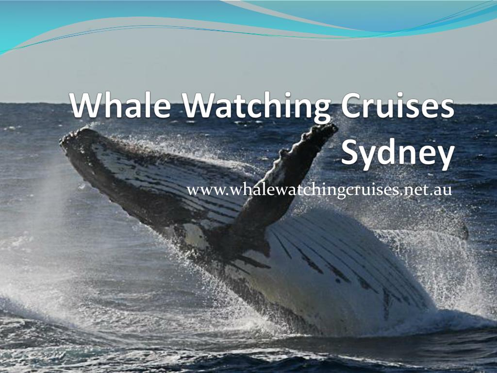whale watching cruises sydney l.
