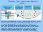 chronic granulomatous disease cgd