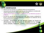 4 morfolog a