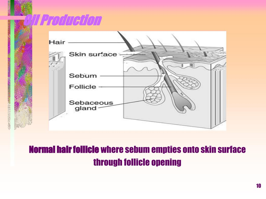 Normal hair follicle