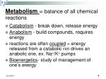 metabolism balance of all chemical reactions