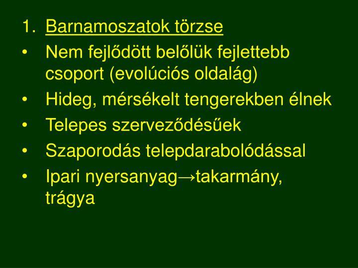 Barnamoszatok törzse