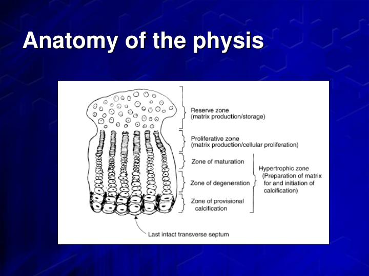 Anatomy of the physis
