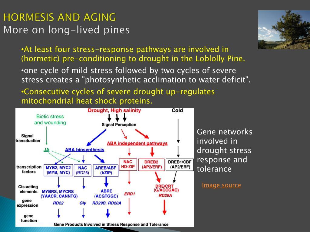 Ppt - Multifactorial Hormesis Powerpoint Presentation - Id -7295