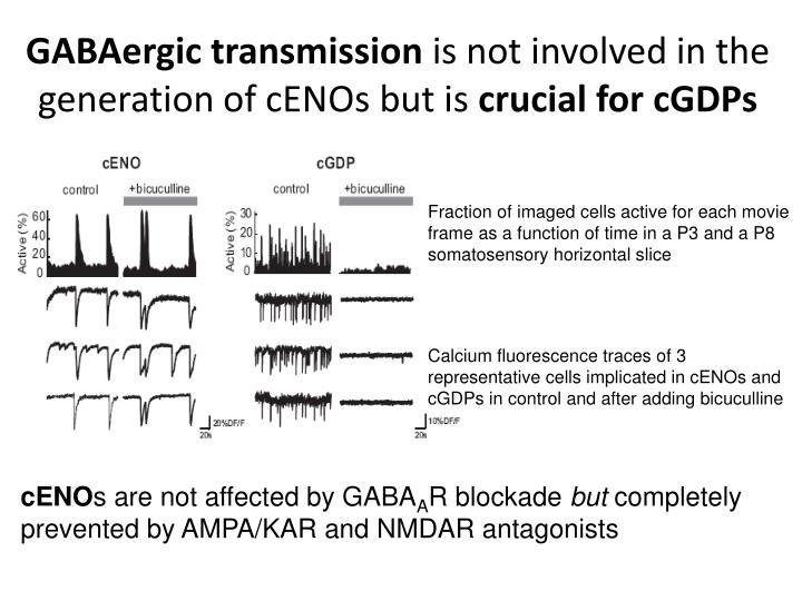 GABAergic transmission