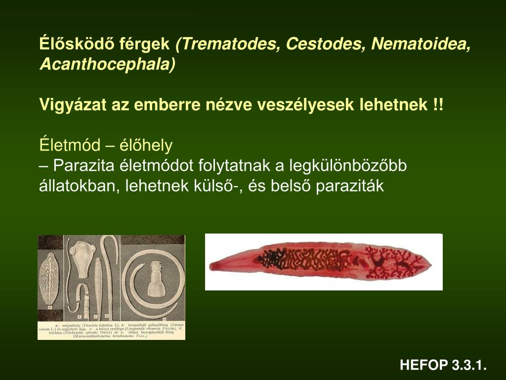 Mik a belső paraziták élőhelyének jellemzői - oraoazis.hu - A parazita élőhelyének sajátossága