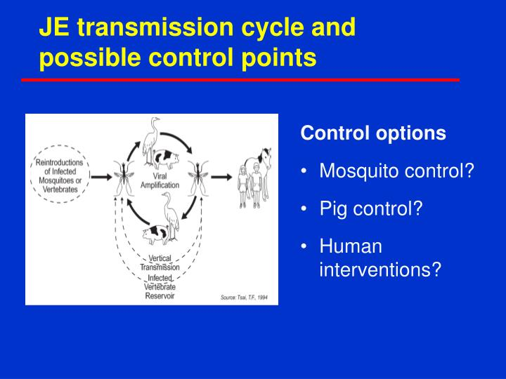 JE transmission cycle and possible control points
