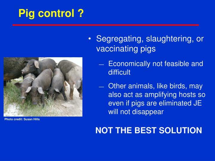 Pig control ?