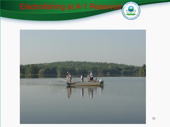 Electrofishing at A-1 Reservoir