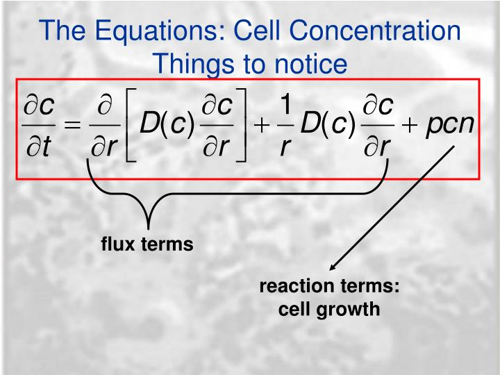 The Equations: Cell Concentration
