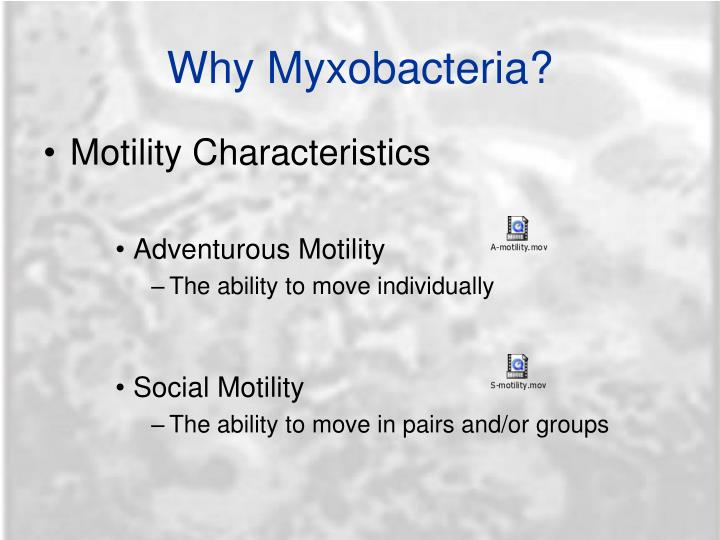 Why Myxobacteria?