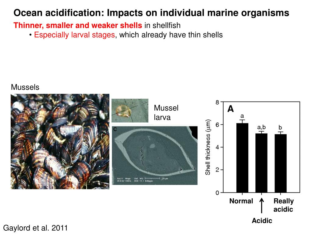 Ocean acidification: Impacts on individual marine organisms