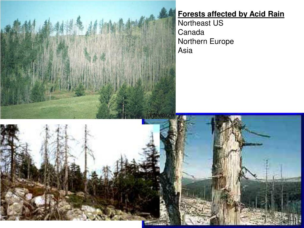 Forests affected by Acid Rain
