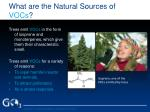 what are the natural sources of vocs