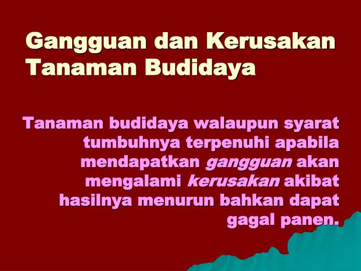 Gangguan dan Kerusakan Tanaman Budidaya