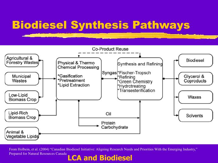 Biodiesel Synthesis Pathways