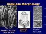 cellulose morphology