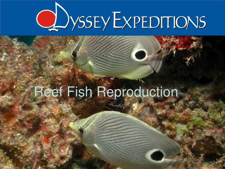 reef fish reproduction n.