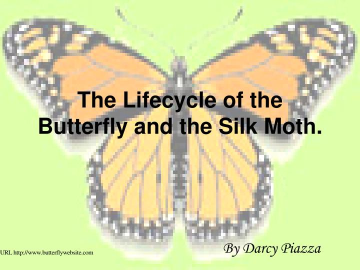 the lifecycle of the butterfly and the silk moth n.