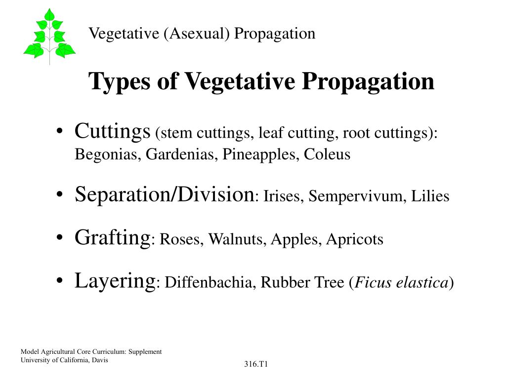 Asexual reproduction vegetative propagation ppt template