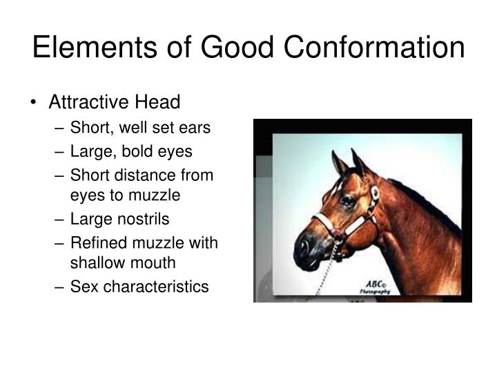 Elements of Good Conformation