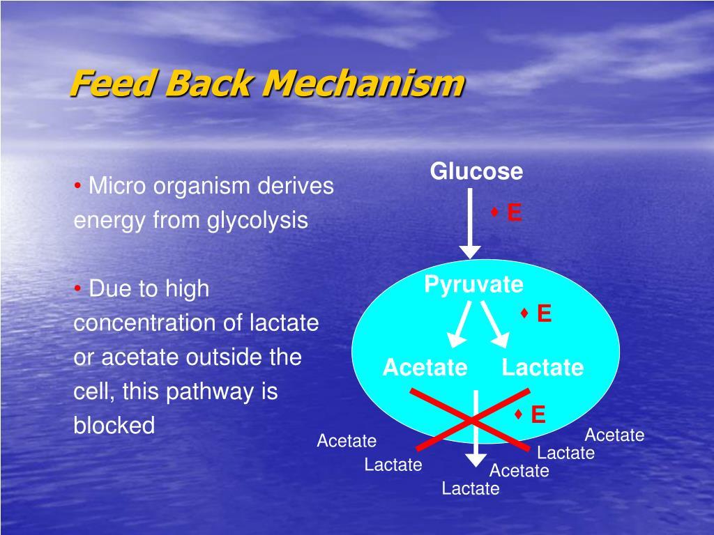 Feed Back Mechanism