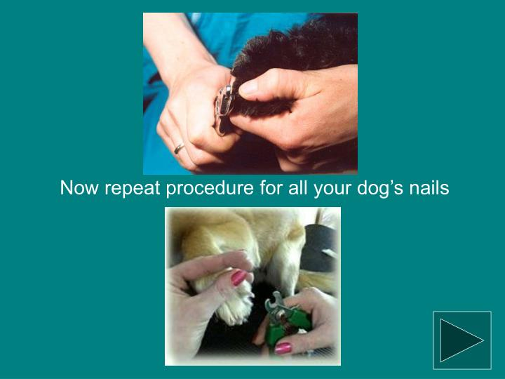 Now repeat procedure for all your dog's nails