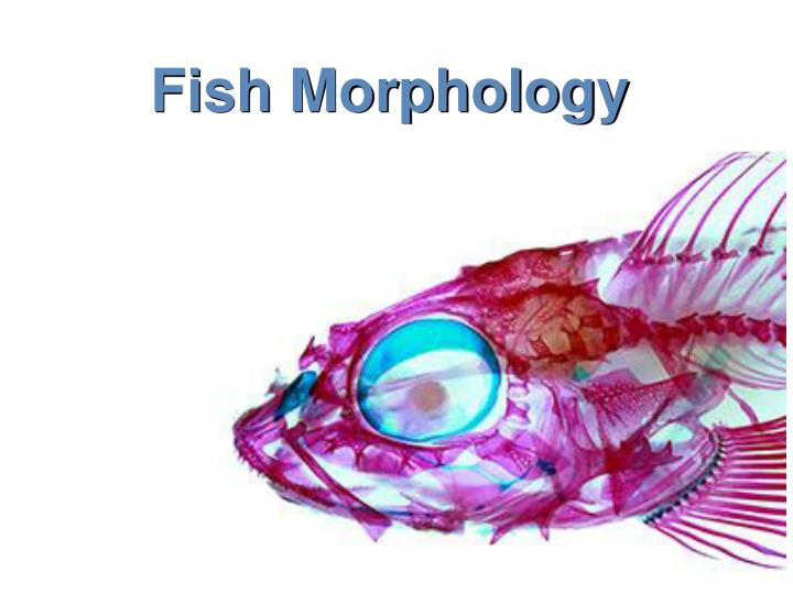 fish morphology n.