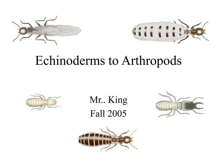 Echinoderms to arthropods
