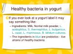 healthy bacteria in yogurt