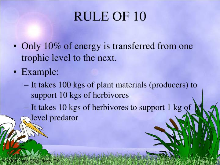 Only 10% of energy is transferred from one trophic level to the next.